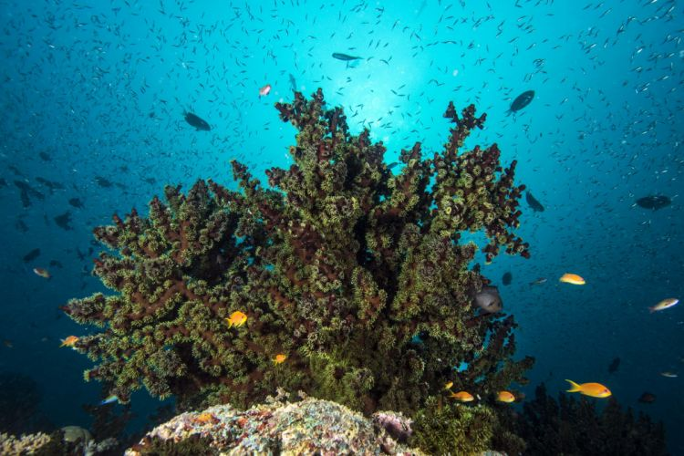 coral reef fish seabed surface sunlight wallpaper