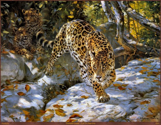 leopardo felino depredador animales wallpaper
