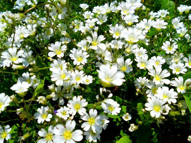 arth Flower Nature Plant wallpaper