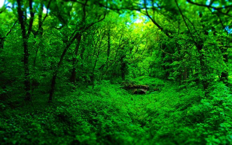 bosque arboles naturaleza wallpaper