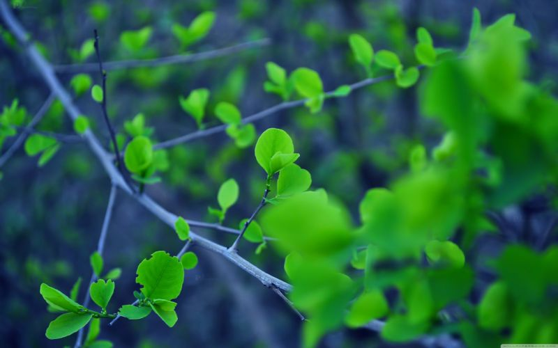 trees leaves branch wallpaper