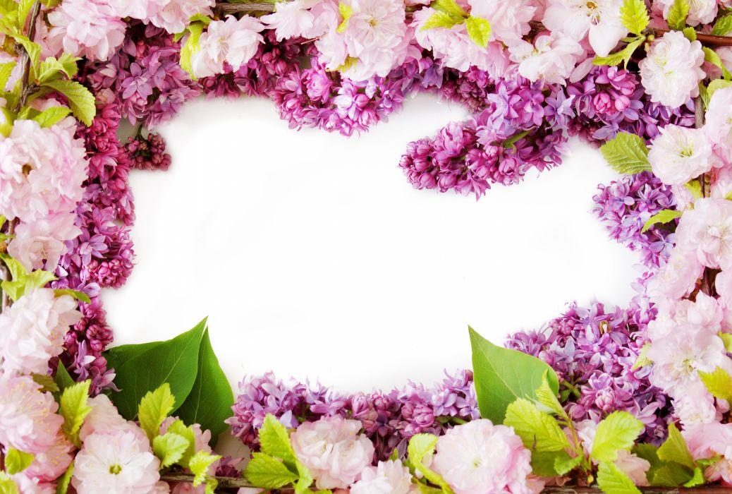 eranium Closeup Flowers wallpaper