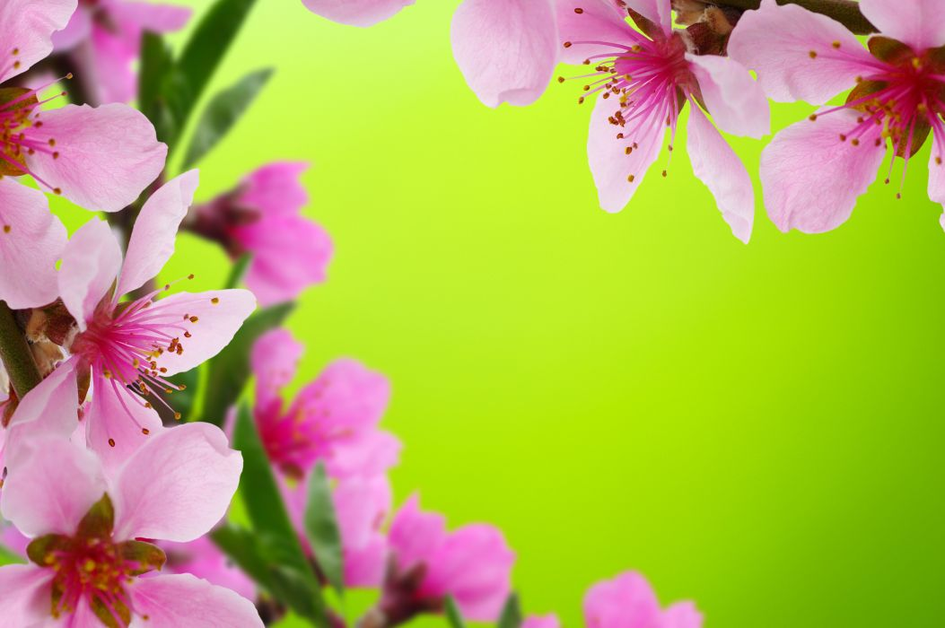 Ahlias closeup pink color flower bud flowers wallpaper 5000x3324 ahlias closeup pink color flower bud flowers wallpaper mightylinksfo