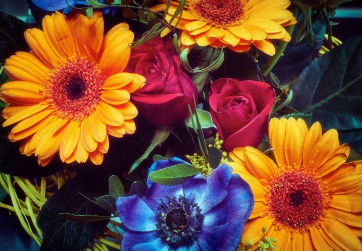 erberas Closeup Yellow Flowers wallpaper