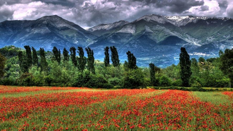paisaje naturaleza flores montay wallpaper