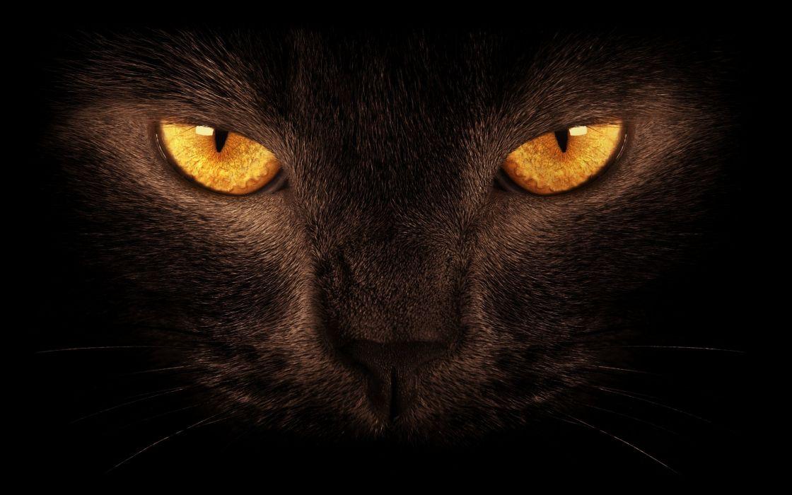 Animal Beautiful Black Cat Cat Close Up Hauntingly Macro Orange Eyes
