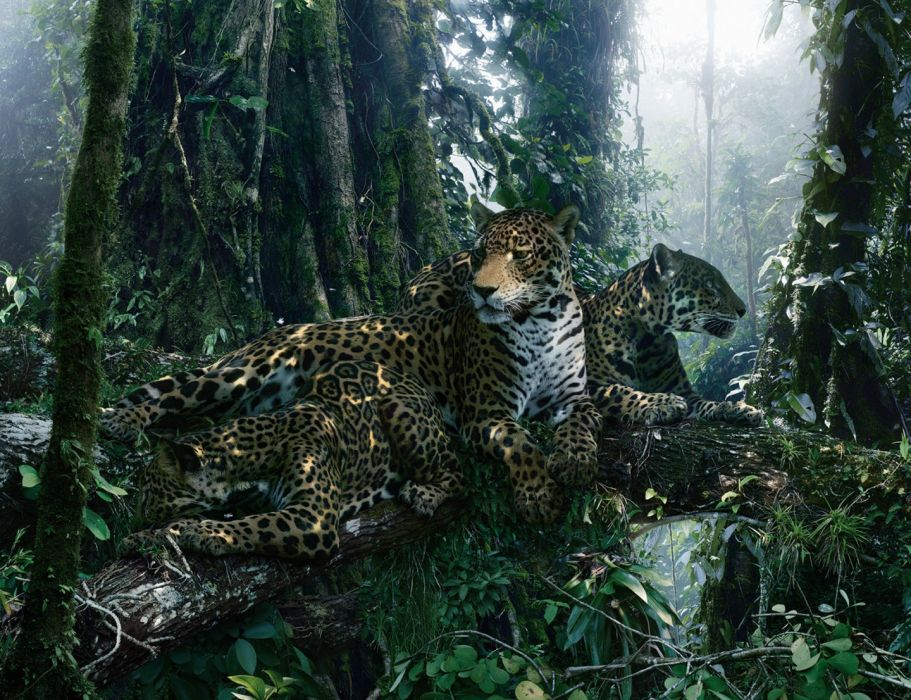 animal beauty cheetah forest trees wallpaper