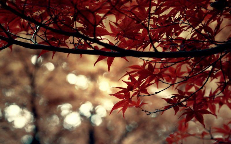 tree leaves red wallpaper