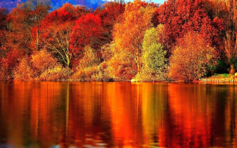 nature forest red autumn amazing beauty lake landscape wallpaper