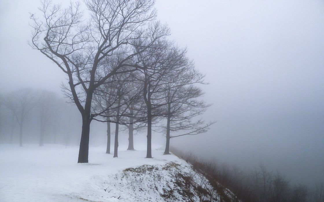 dry branches edge fog mountain nature snow snowstorm tree trees wind winter wallpaper
