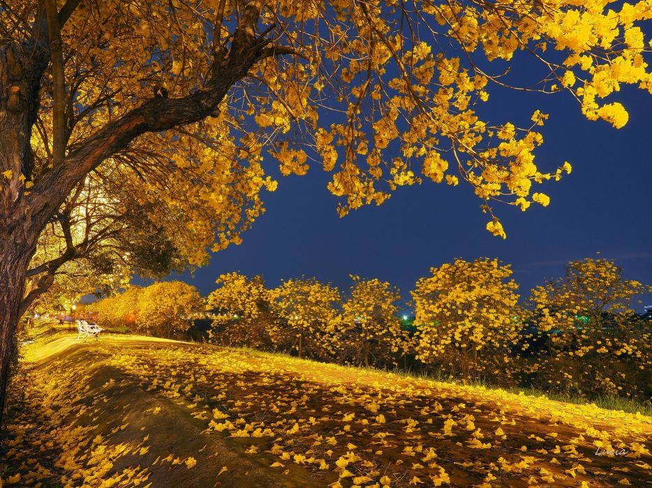 nature autumn beauty blue sky fall Falling landscape leaves Night park road romantic tonight tree trees yellow trees wallpaper