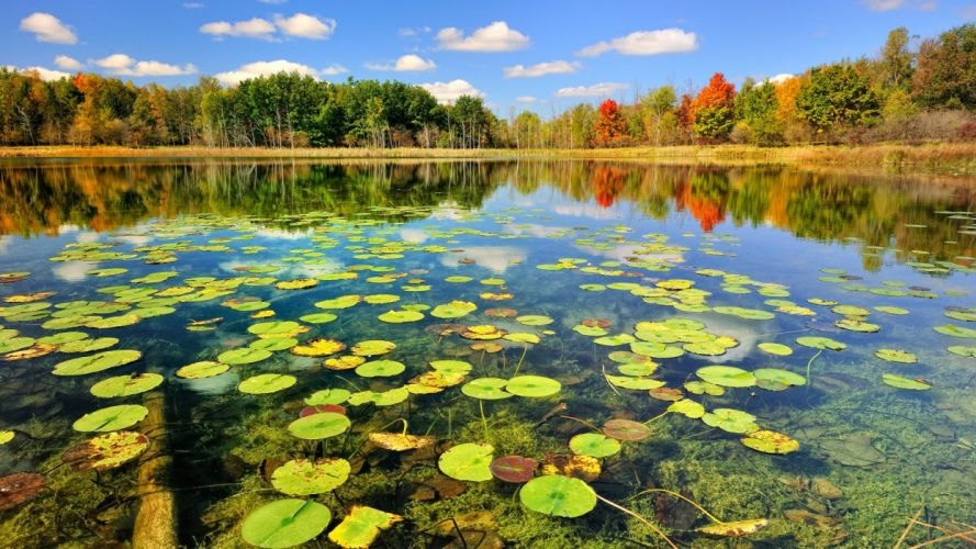 nature autumn beauty blue sky color forest lake lilies park photo tree view water wallpaper