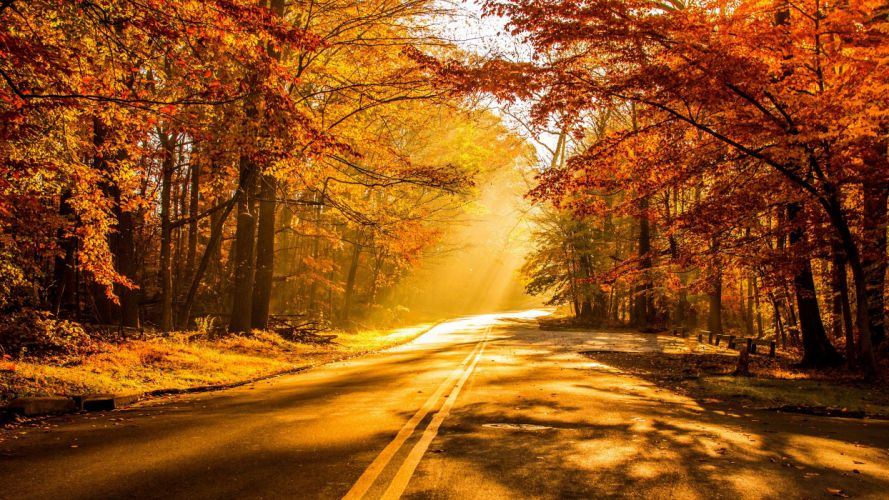 nature autumn beautiful forest leaves morning park picture road scenic shine sunshine trees warm yellow crocuses wallpaper
