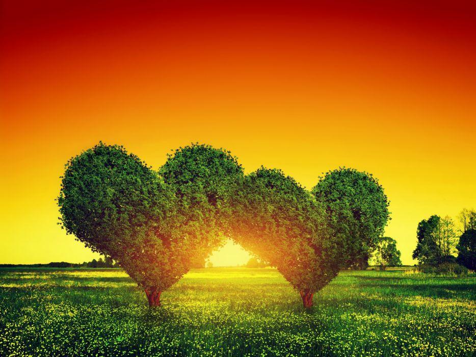 beauty couple couples field flower green green tree heart love orange photo red romantic sky sun sunset tree trees wallpaper
