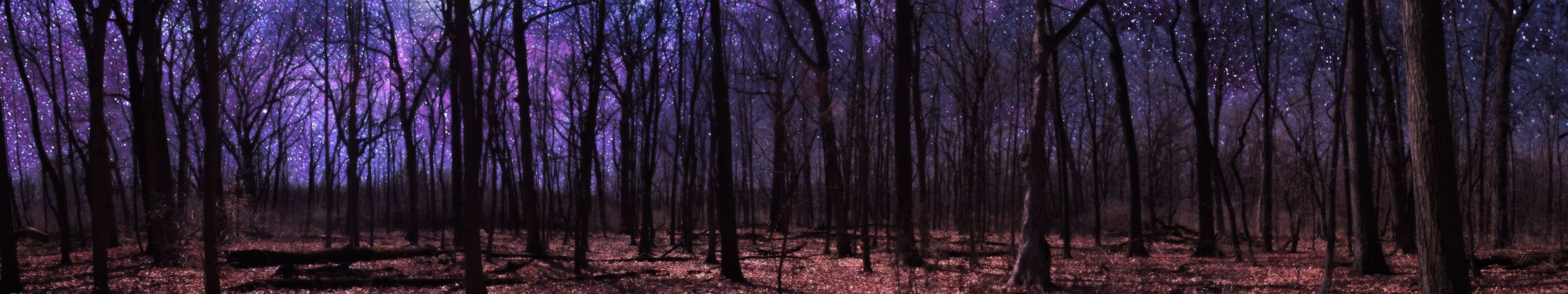 forest foret wallpaper