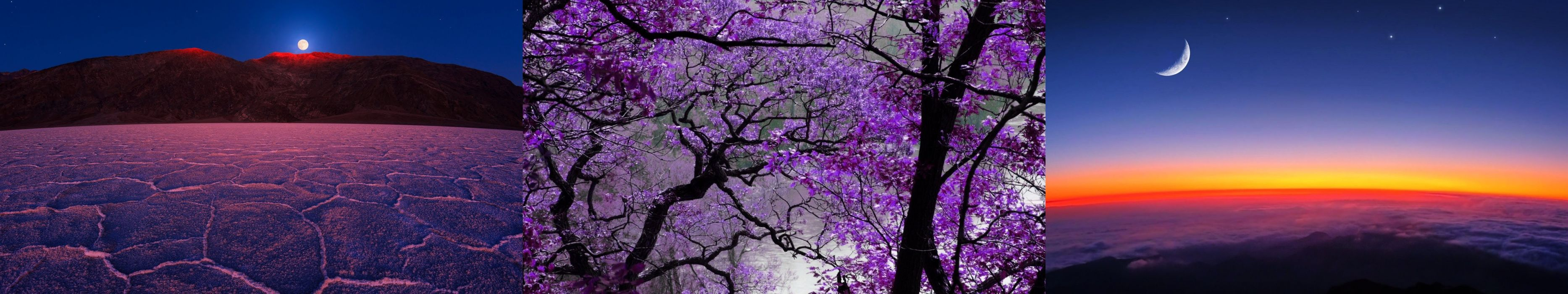 nature mauve purple wallpaper