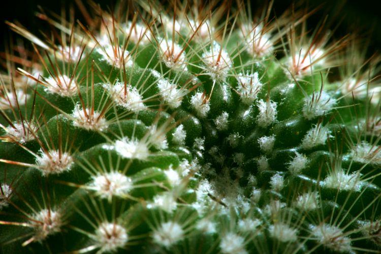 cactus spines plant succulent macro wallpaper