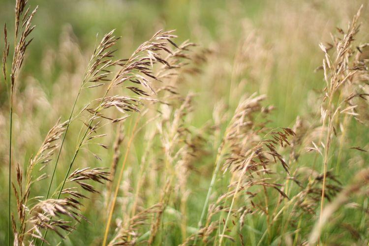 grass field summer meadow wallpaper