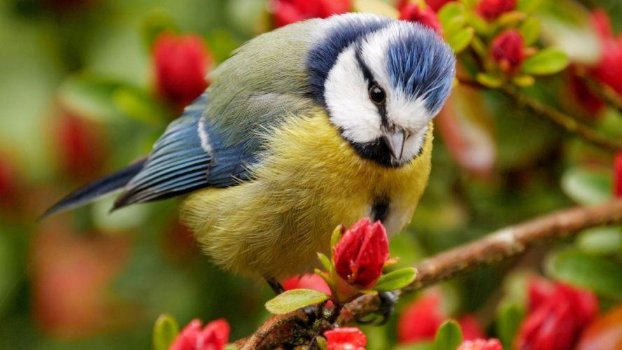 animals birds wallpaper