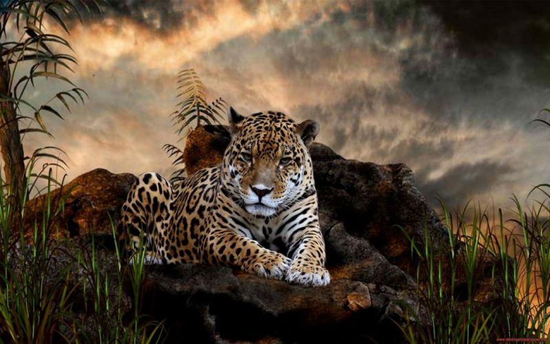 animals jaguar forest wallpaper