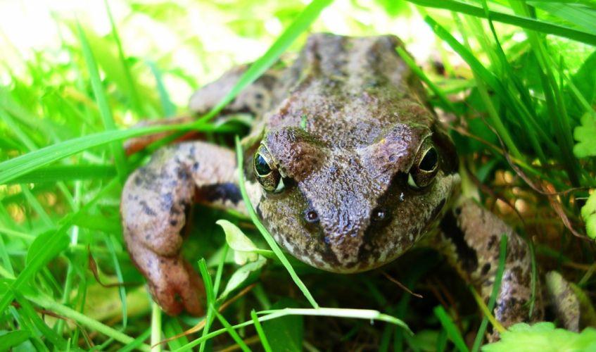 frog garden summer wallpaper