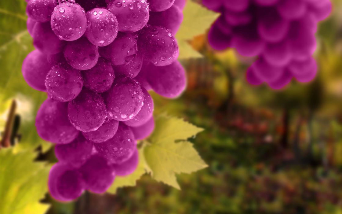 grapes leaves buncyyh drops fruit vineyard 1920x1200 wallpaper
