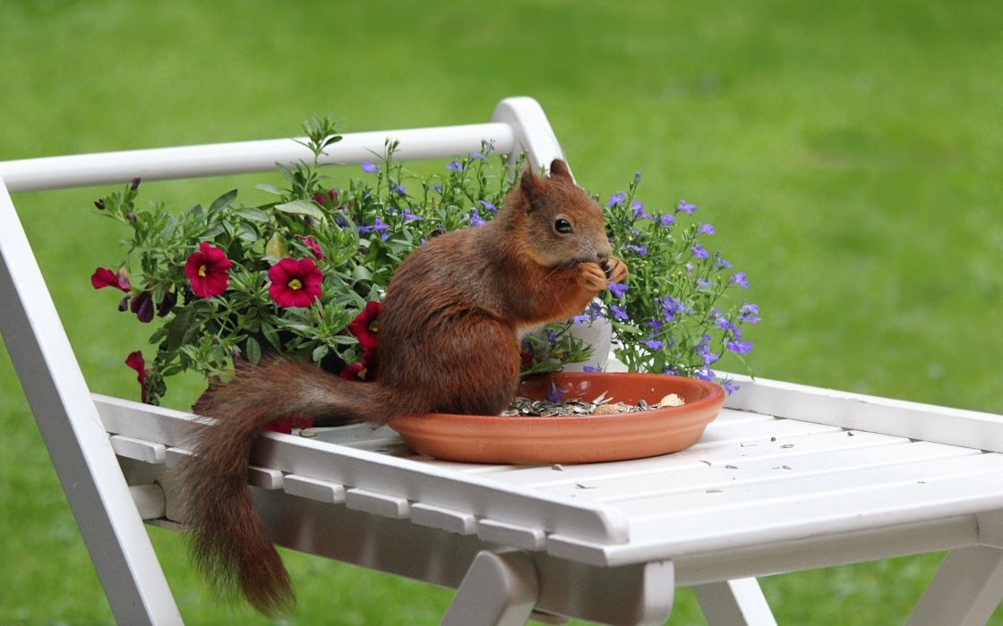 squirrel on the table chewing seeds wallpaper