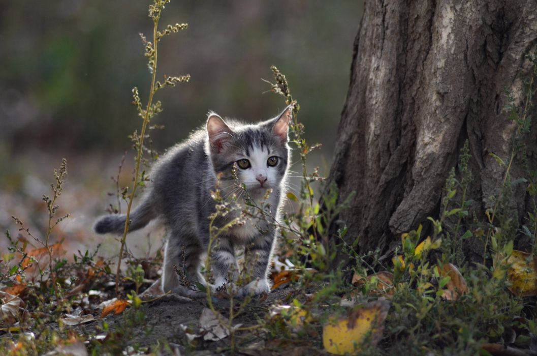 cat look background kitten wallpaper
