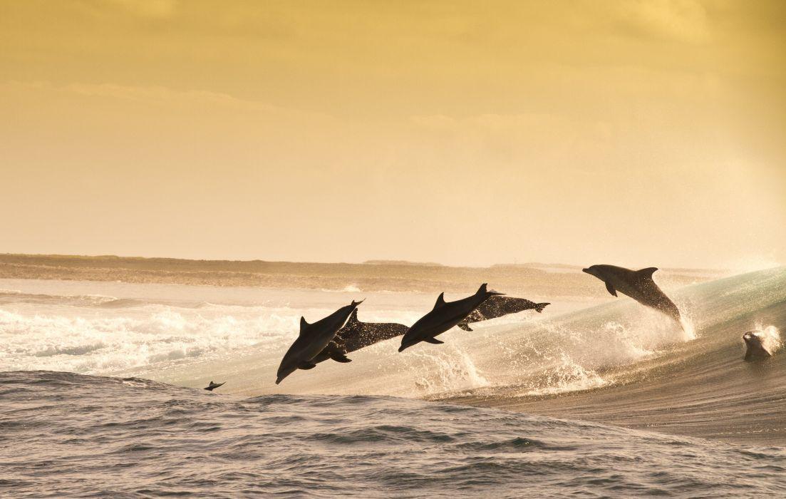 dolphin jumping wave sea evening water splash playful wallpaper