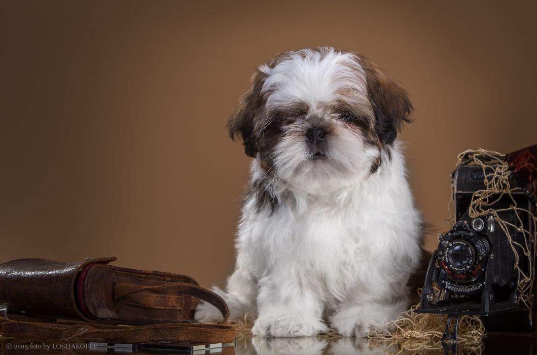 dog puppy wallpaper