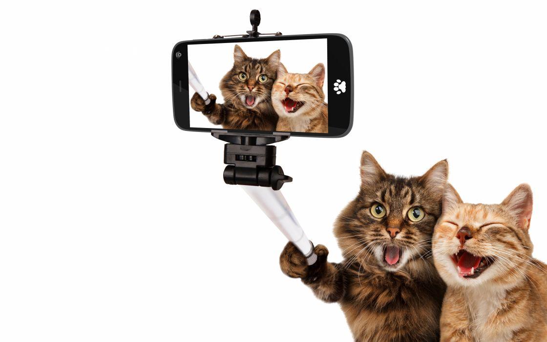 Cat Two Smartphone White background Animals Humor wallpaper