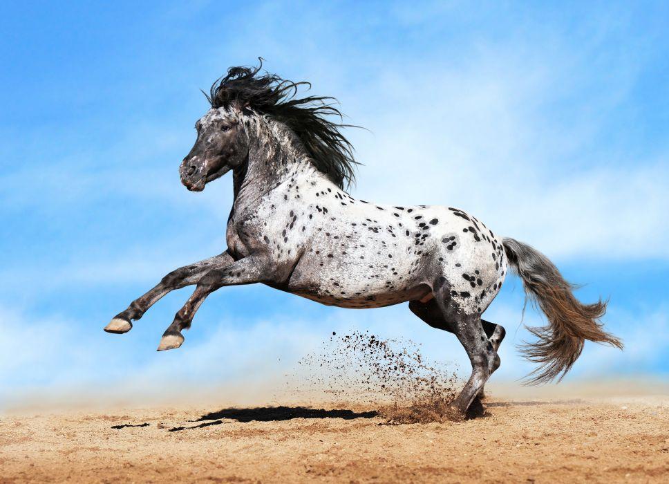 Horse Sky Run Animals wallpaper