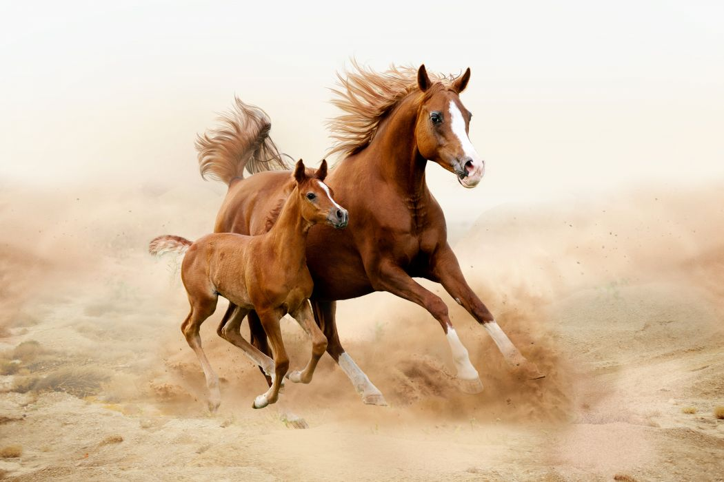 Horse Cubs Two Run Animals wallpaper