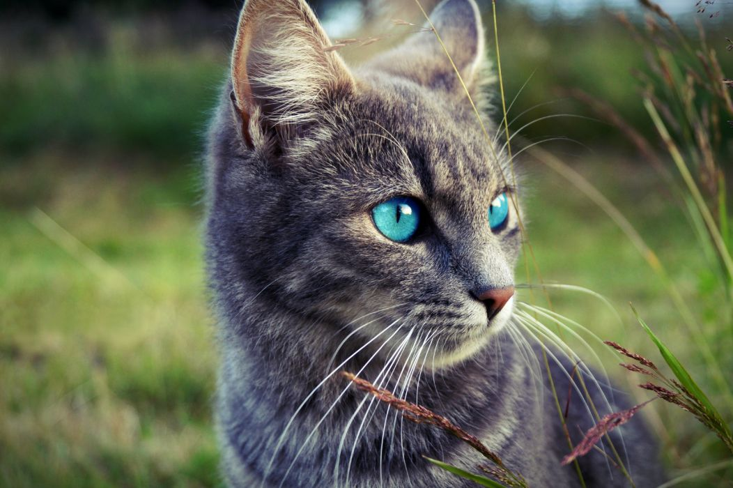 Cat Glance Whiskers Animals wallpaper