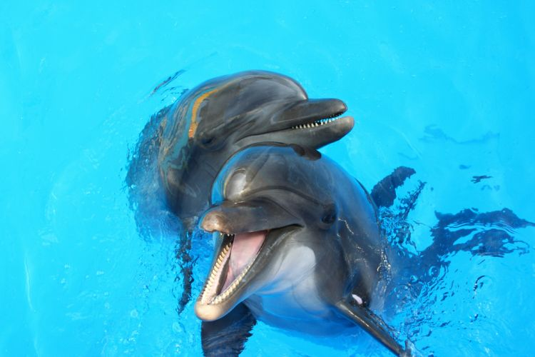 Underwater world Dolphin Two Animals wallpaper
