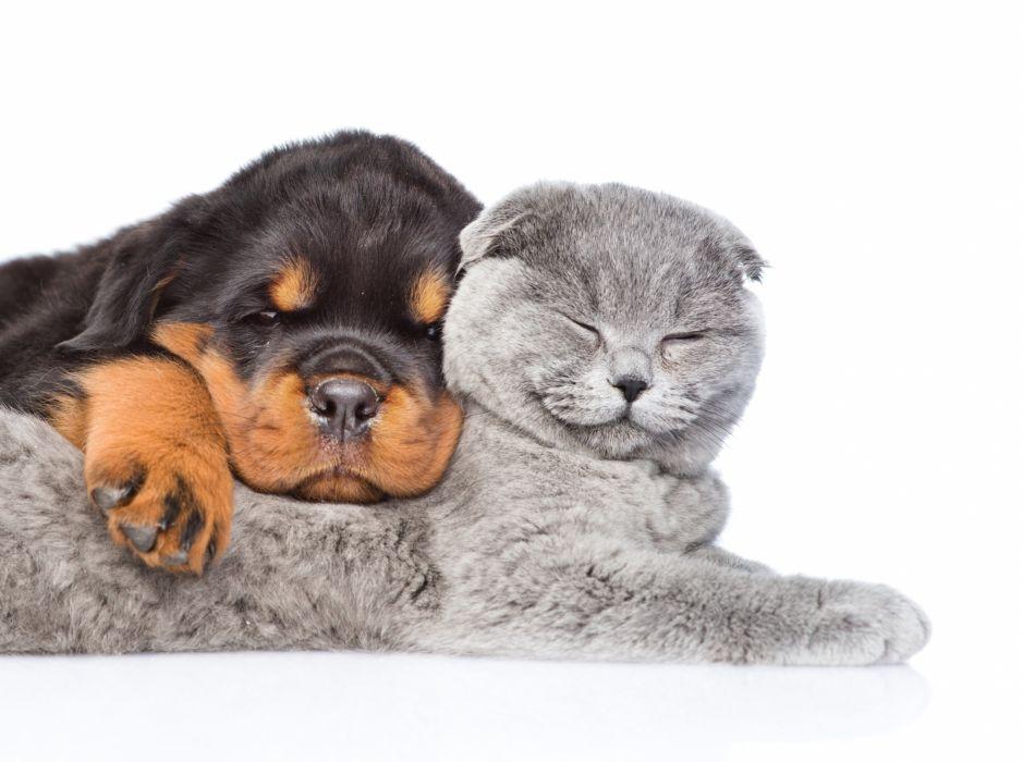 Cat Dog Puppy Kitten Rottweiler Two