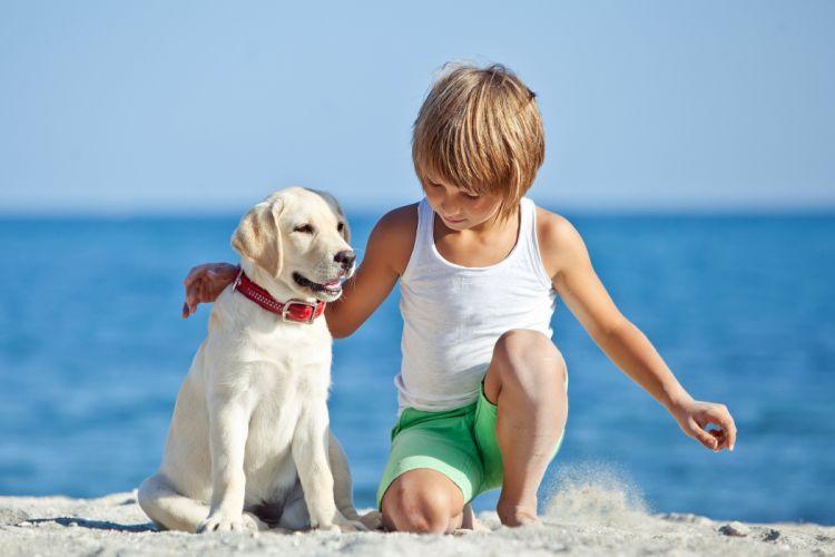 Dog Beach Boy Retriever Singlet Children Animals puppy h wallpaper