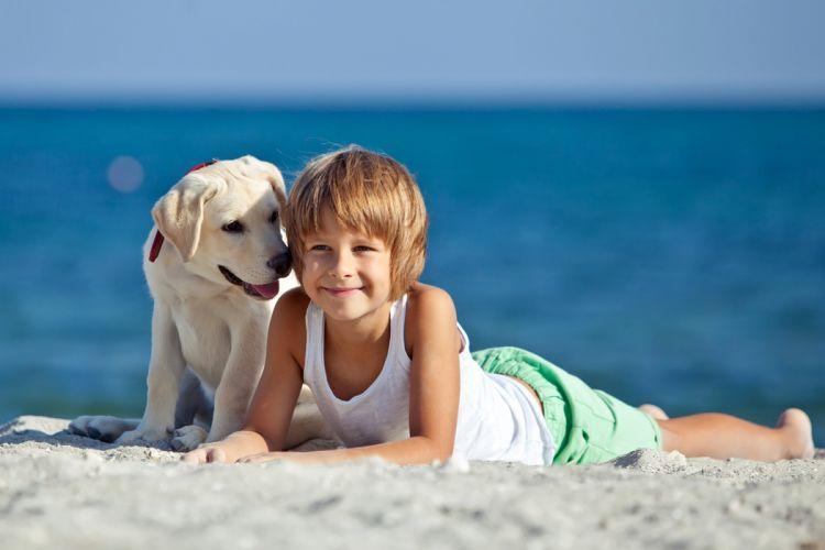 Dog Boy Retriever Beach Singlet Children Animals wallpaper