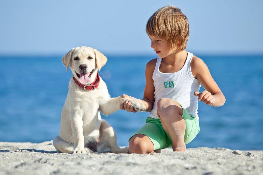 Dog Beach Boy Retriever Singlet Children Animals puppy wallpaper