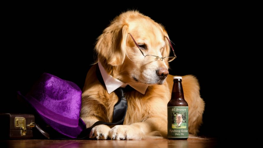 Dog Retriever Black background Hat Glasses Bottle Animals wallpaper