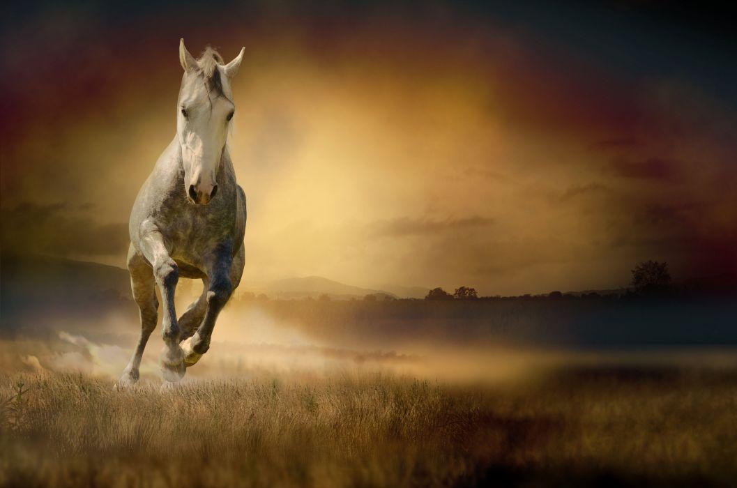 Horse Run Animals wallpaper
