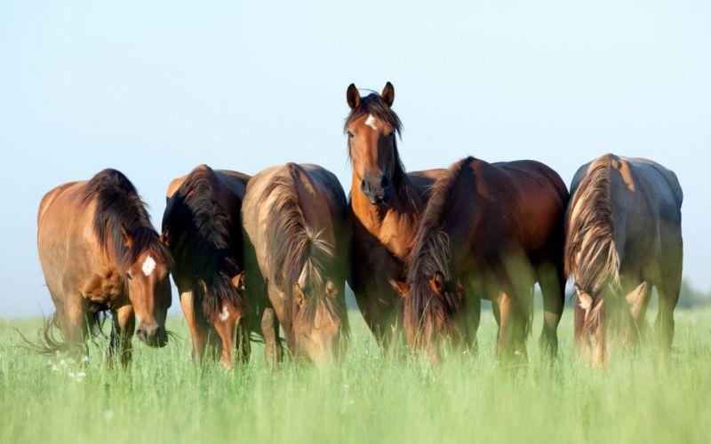 Horse Grass 6 Animals wallpaper