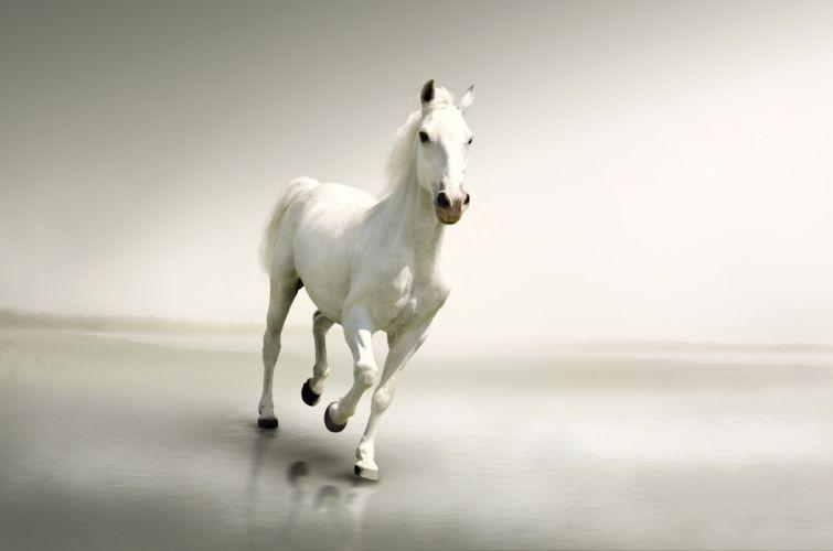 Horses White Run Animals wallpaper
