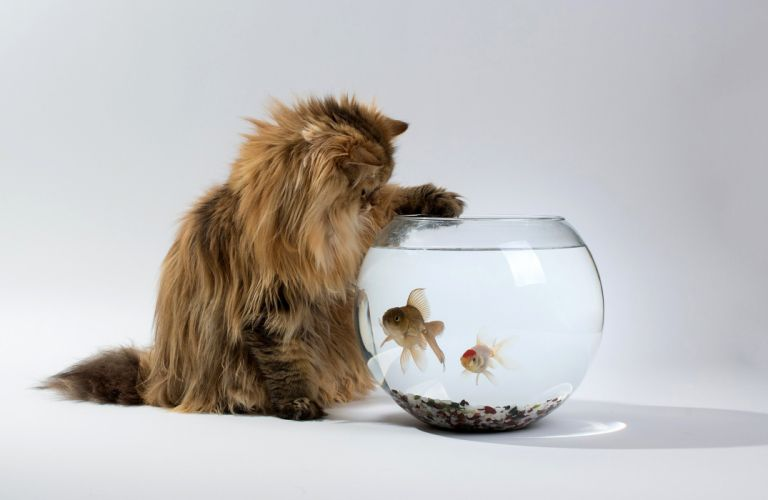 Cats Fish Water Animals wallpaper