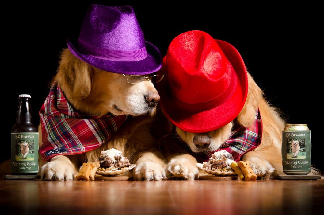 Dogs Beer Retriever Two Hat Bottle Glasses Animals Humor wallpaper