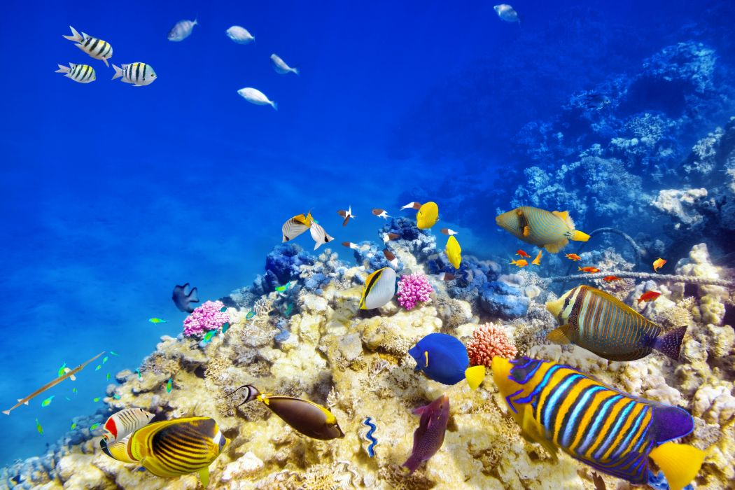 Underwater world Corals Fish Animals wallpaper