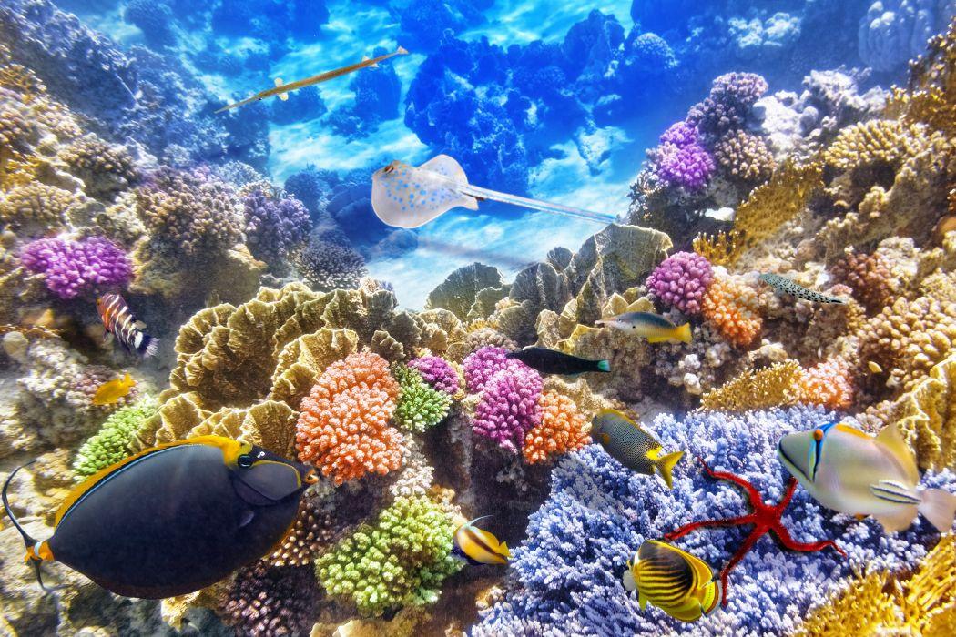 Underwater world Corals Fish Animals g wallpaper