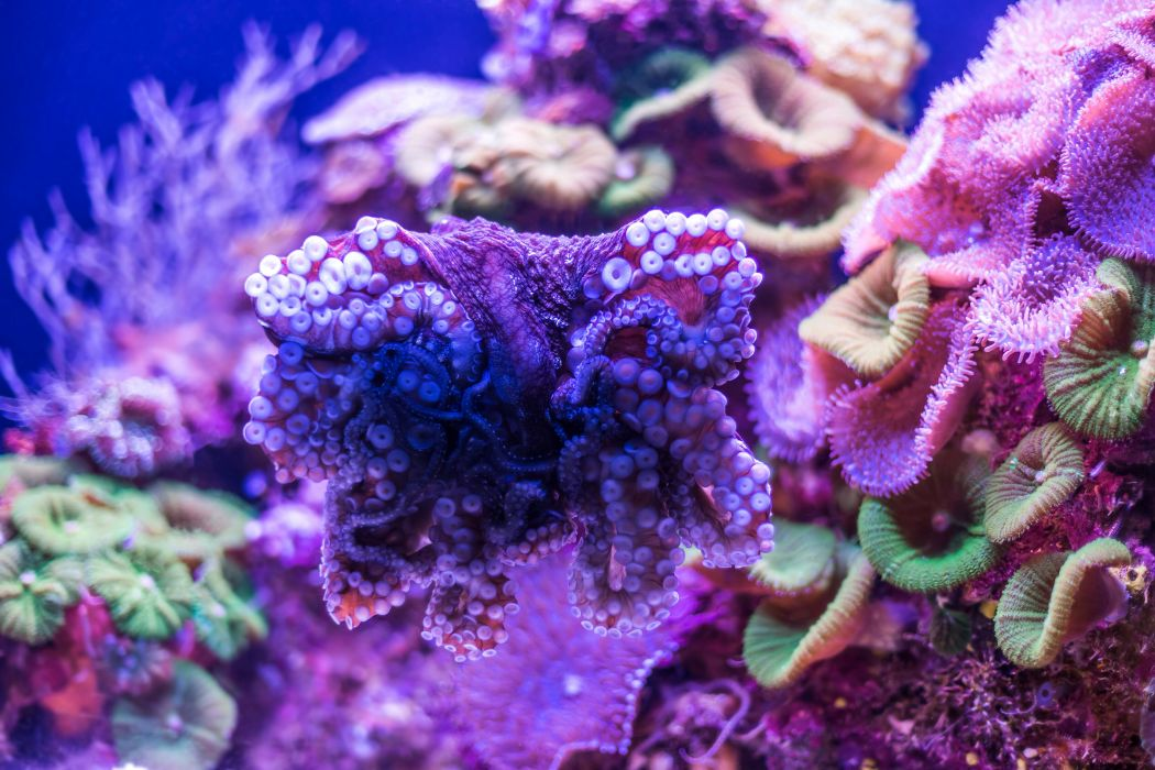 Underwater world Corals Animals wallpapers wallpaper