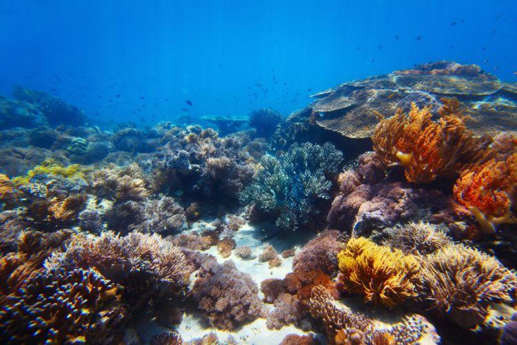 Underwater world Corals Animals wallpaper