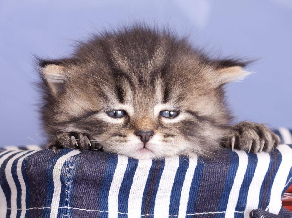 Cats Kittens Snout Animals wallpaper